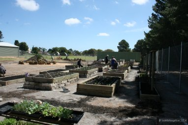 All beds are raised for easier diggin and tending